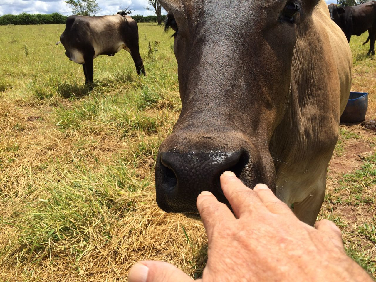mammal, field, domestic animals, grass, livestock, day, nature, real people, outdoors, human hand, one animal, human body part, one person, men, close-up, people