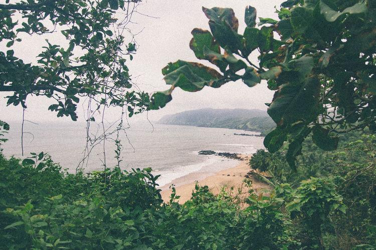 Beach Beachphotography Cola Beach Goa Lake Nature Tree