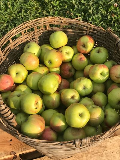 Apples Yellow Color Harvesting Ekerö The Week on EyeEm Fresh Fruits Healthy Eating Food Food And Drink Basket Container Fruit Wellbeing Freshness High Angle View Apple - Fruit Large Group Of Objects Directly Above Outdoors Still Life Day