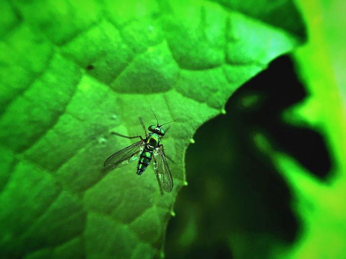 Fresh Nature Nature Photography Green Beauty In Nature Insect Life Insect Beautiful Nature Gold Gold Insect