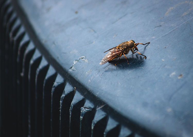 Inner city insect