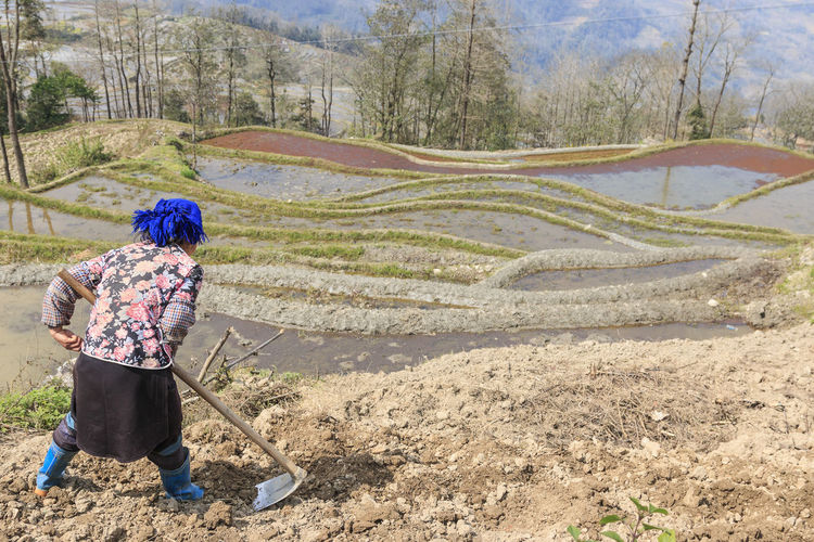 YuanYang, China - February 21, 2017: Hani farmer working on a rice terrace in YuanYang, Yunnan, China. Hani are one of the 56 minorities in China and are native of YuanYang in Yunnan. Agriculture ASIA Bada Banaue Philippines Chinese Minority Dali Yunnan Duoyishu Ethnic Minority Hamanoura Tanada Hani Honghe Laohuzui, Laoyingzui Lijiang, Rice Terraces Sapa, Vietnam Shangrila, Shengcun Market Tegalalang Ubud UNESCO World Heritage Site Water Buffalo Yi Yuanyang Yunnan ,China