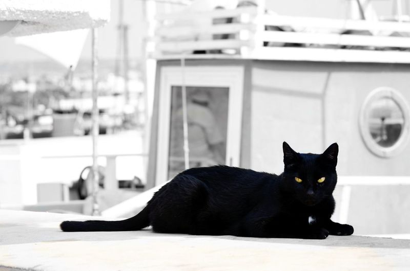Blackandwhite Photography BLackCat Cat Lovers Catoftheday Catlovers Katze Schwarzekatze Katzenfoto Schwarzerkater Katzenaugen Cateyes CatEye Schwarzweißfotografie Blackdevil