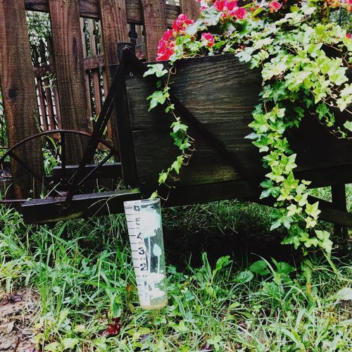 Hurricane Harvey over flowed our rain gauge Rain Rain Gauge Hurricane Hurricane Harvey 2017 Tennessee Plant Growth Leaf Flower Day Outdoors Wood - Material Nature Storm The Week On EyeEm EyeEm Best Shots Grass Close-up Green Color USA