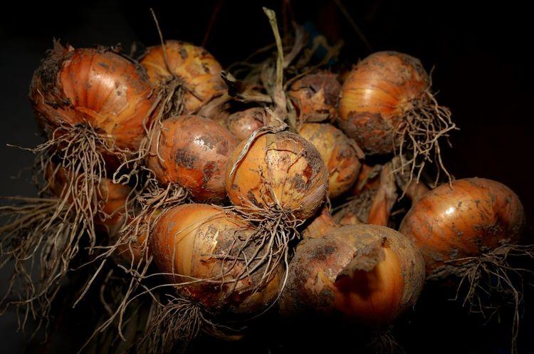 Nature Onions