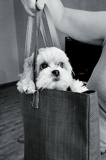 Tippy in a bag.