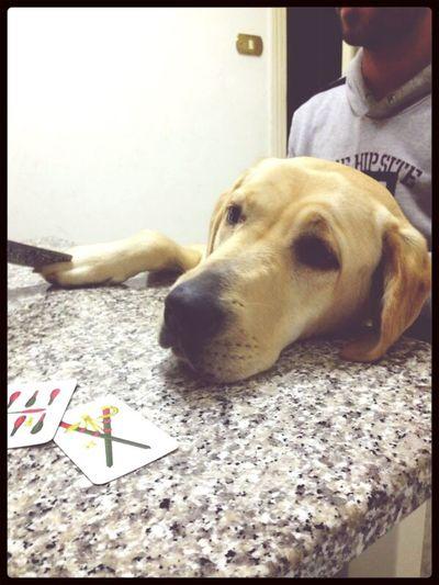MyJoy Mydog Play Time