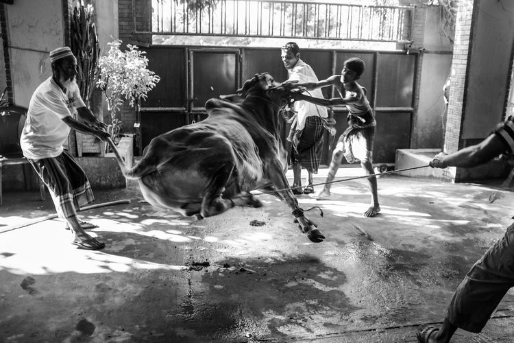 The Moment - 2015 EyeEm Awards Eid Ul Adha Sacrifice On eid ul adha, a cattle is sacrificed in the name of God, and the meat is distributed in three equal parts, one for you, one for the relatives and one for the poor.