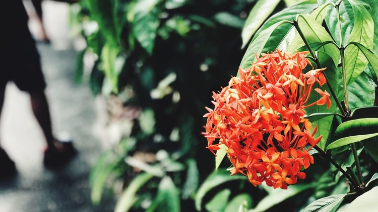 Flower Growth Beauty In Nature Nature Fragility Plant Petal Freshness Day Flower Head Outdoors Blooming Leaf No People Close-up