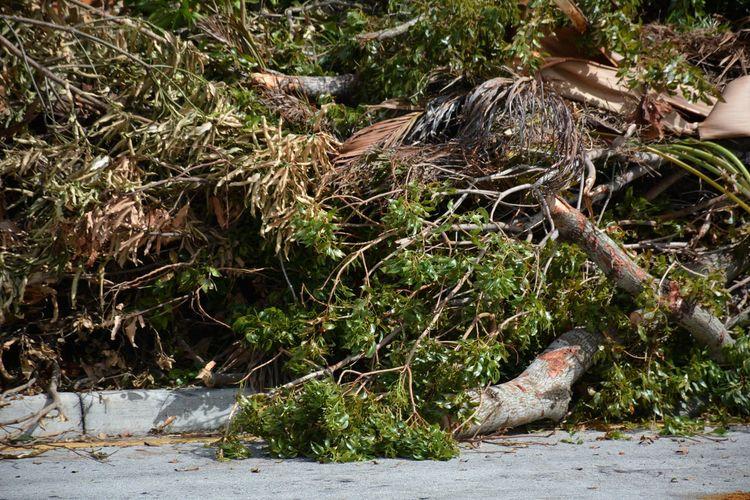 Hurricane Irma 2017 aftermath Outdoors No People Close-up Tree Downed Trees Piles Of Wood Hurricane Irma 2017 Hurricane Season  Roadside Storm Debris Aftermath TreePorn Hurricane Damage Hurricane Season  South Florida Downed Tree Debris Full Frame Backgrounds