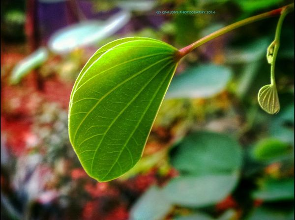Leaves Leaves Only Leaves Green Leaves Nature_collection