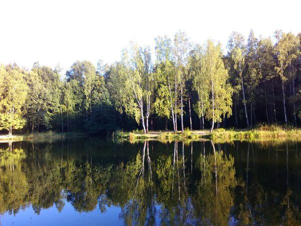 Beautiful Nature Trees And Sun Life Is Beautiful Popular Photos