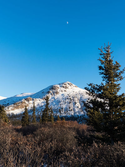 moon over mountain Beauty In Nature Blue Blue Sky Canada Clear Sky Cold Temperature Day Landscape Mountain Mountain Range Nature No People Outdoors Scenics Sky Snow Tranquility Tree Wilderness Wilderness Adventure Wilderness Area Winter