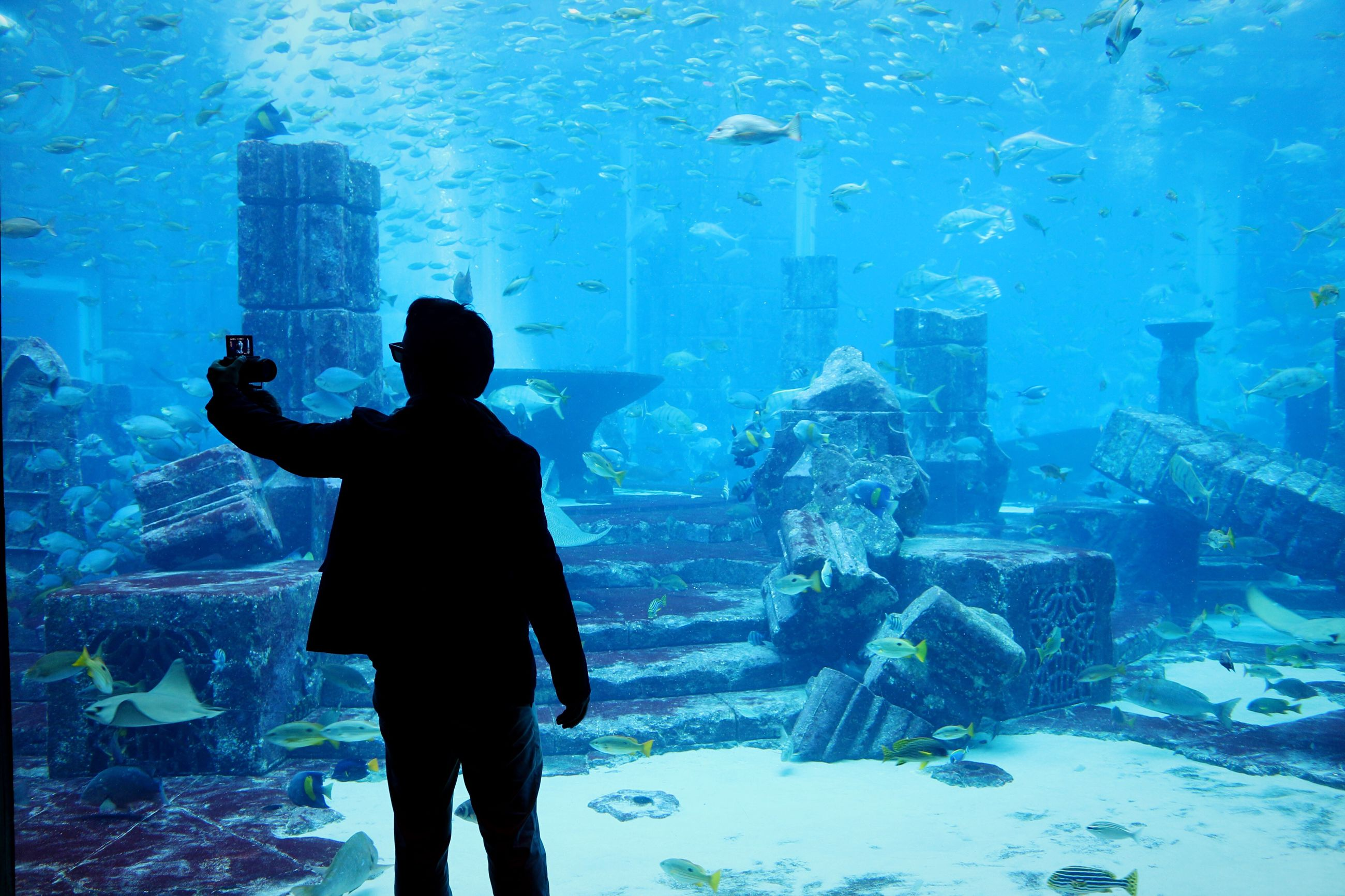 blue, silhouette, water, one person, aquarium, underwater diving, people, men, sea, only men, sea life, adult, undersea, day, one man only, adults only, outdoors, scuba diving
