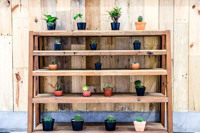 Shelf Potted Plant Wood - Material Variation No People Plant Day Indoors
