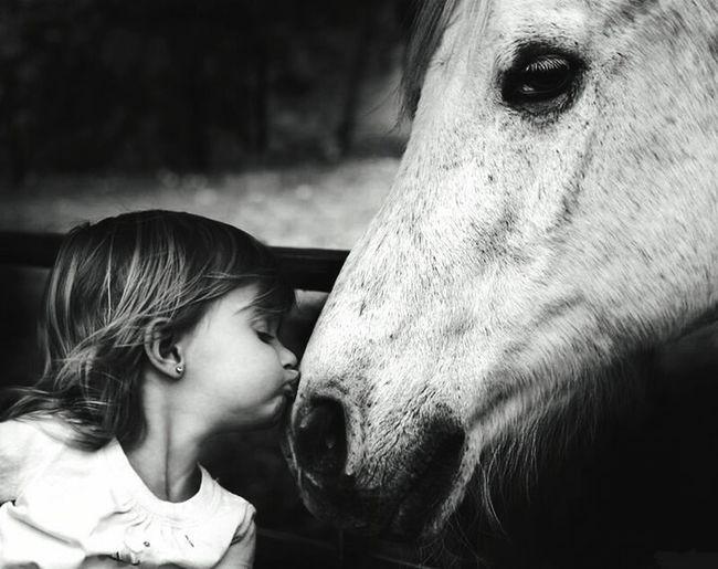 출처 : 구글 Horse Baby Babygirl Kiss Google Horse And Baby