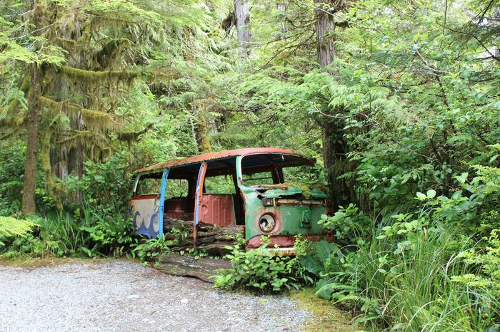 Volkswagen Abondoned Deep In The Woods Happy In Its Burial Ground Vintage Cars Old Vans i could tell many a good story or two 😊