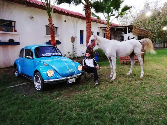 Atatürk At çiftliği Woswos İskenderun Atciftligi At Dörtyol City Car Architecture Horse Cart Horse Parking