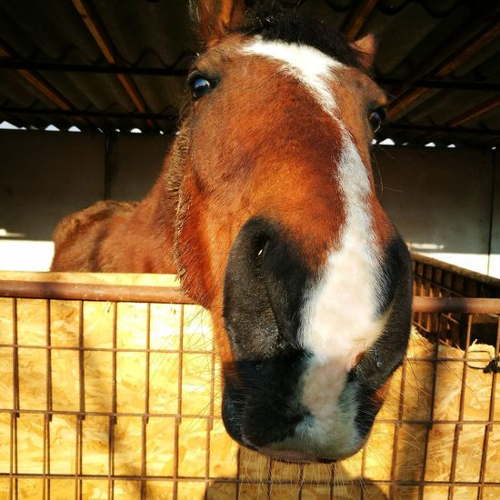Horse One Animal Domestic Animals Animal Themes Mammal Pets Indoors  No People Close-up Day