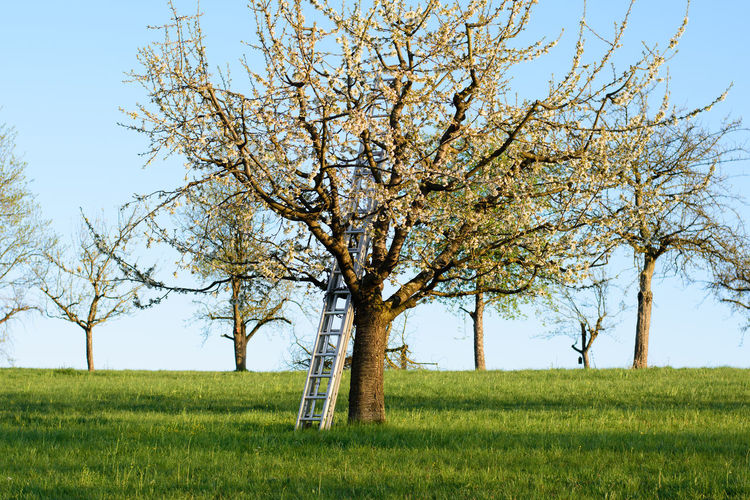 Tree on grassy field against sky
