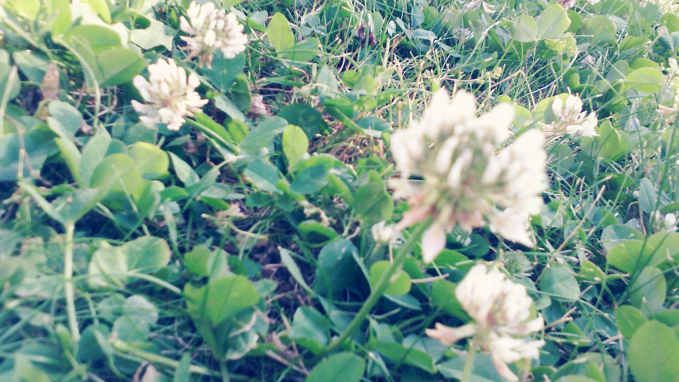 flower, growth, freshness, fragility, plant, leaf, petal, white color, beauty in nature, nature, blooming, flower head, green color, close-up, in bloom, focus on foreground, high angle view, day, growing, blossom