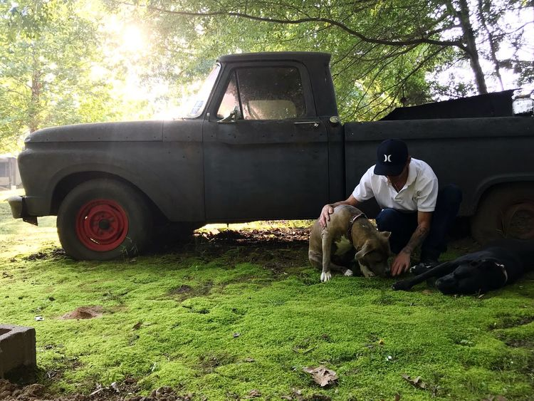 Best friends and a truck Moss Truck Dogs Mode Of Transportation Land Vehicle Transportation Plant Real People Nature Men Outdoors
