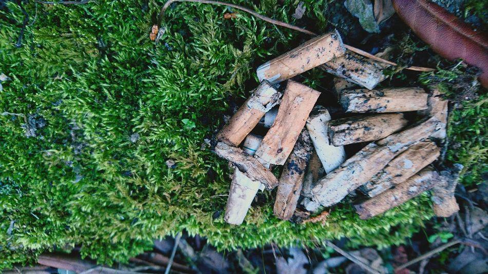 煙草 苔 Pile Timber Deforestation Firewood Fishing Equipment Environmental Damage Forestry Industry Hardwood Tree Stump Knotted Wood Fossil Fuel Lumber Industry Environmental Issues Fire Pit Axe Bonfire Log Wood Tree Ring