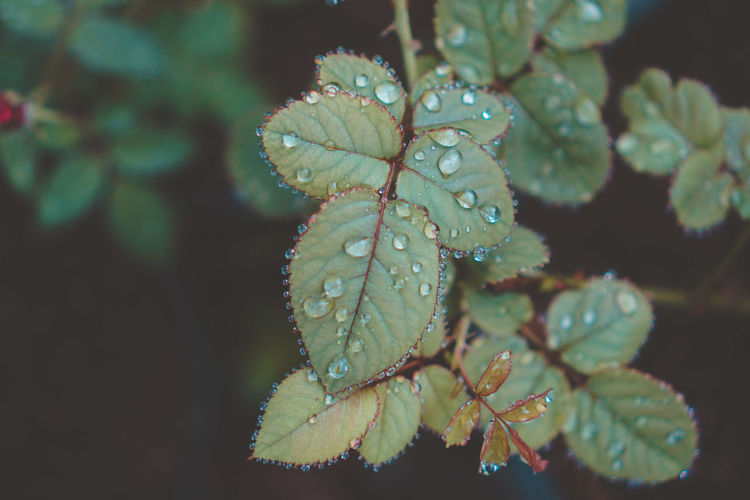 Close-up of wet plant leaves