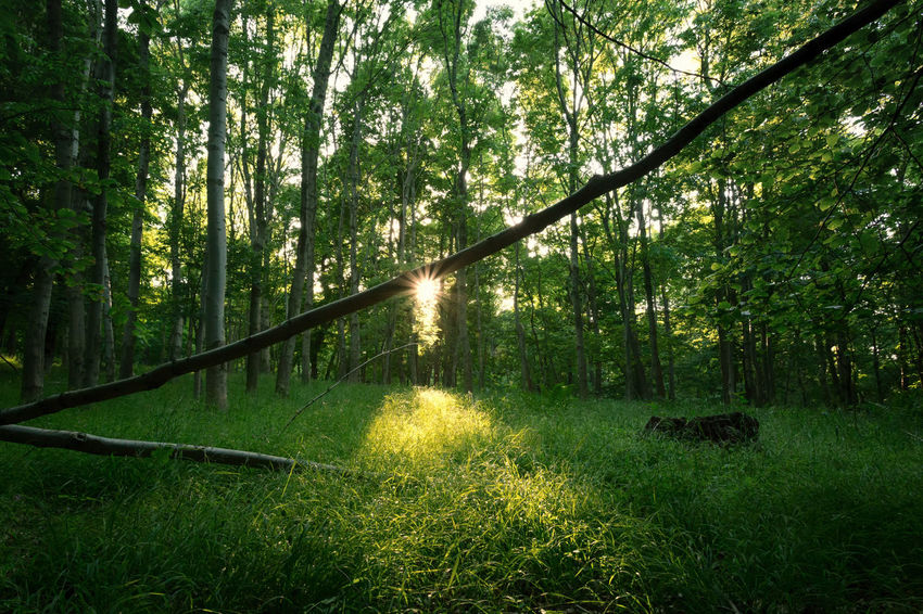 Nature Wood Animal Themes Beauty In Nature Day Forest Forest Photography Grass Green Color Growth Mammal Nature No People Outdoors Scenics Sky Tree Wald Waldlandschaft Wood - Material