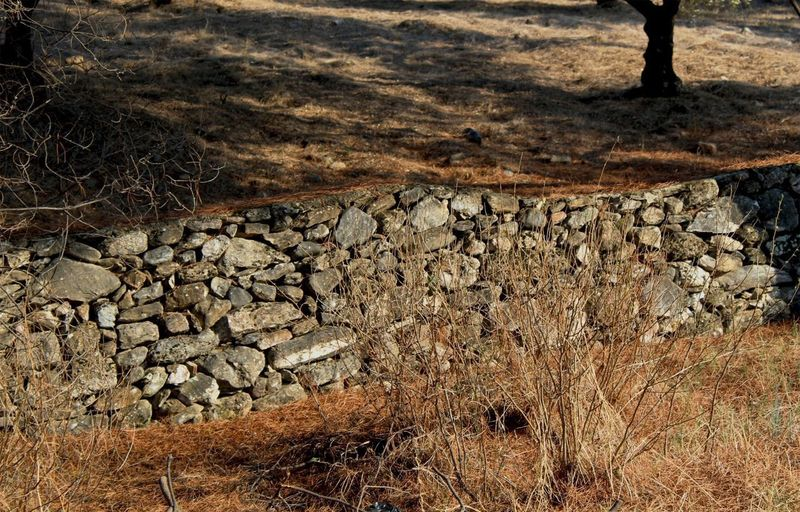 High angle view of stone wall in forest