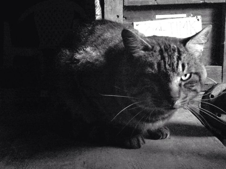 Cat Hanging Out Taking Photos Black & White