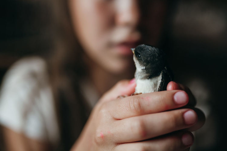 Midsection of girl holding bird
