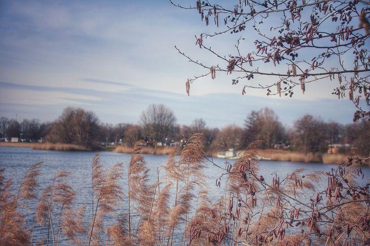 *Die Lichtung am See* Es liegt im warmen Sonnenlicht, in morgendlicher Zeit, die grüne Lichtung am stillen See, sie macht das Herz so weit. Der Birken Rahmen lieblich, schlicht, ein Schattenspiel, dort wo ich steh. Und dieser Himmel blau und licht, wie spiegelt er sich in dem See. Hier in der Stille zu verträumen die Zeit mit dir, ein selten Glück. Betreten andachtsstille Räume, die währen einen Augenblick. Es liegt im warmen Sonnenlicht zu morgendlicher Zeit, am See, die Lichtung schön und schlicht, so nah und doch so weit. (© R. Brunetti, 2015) Awakening Of Nature Bare Tree Beauty In Nature Betterlandscapes EyeEm Best Shots - Nature EyeEm Gallery EyeEm Nature Lover Exceptional Photographs Germany🇩🇪 Ladyphotographerofthemonth Lake View Lakeshore Nature On Your Doorstep Nature Photography Naturelovers Paradise Beach Photography Is My Escape From Reality! Poetry In Pictures Silent Moment Soft Light Sunny Day 🌞 Tranquil Scene Tranquility Untamed Heart