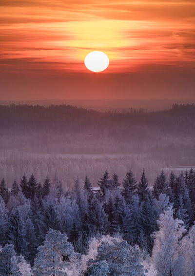 Scenic winter landscape with sunset and frosty tree at evening time in Finland. Finland Frost Landscape_Collection Sunlight Sunset_collection Winter WoodLand Beauty In Nature Cold Cold Temperature Forest Idyllic Landscape Mood Nature Outdoors Scenics Sky Snow Sun Sunrise Sunset Tranquil Scene Tranquility Tree Shades Of Winter