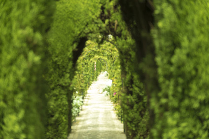Andalucía Granada SPAIN Alhambra Alley Beauty In Nature Day Diminishing Perspective Direction Foliage Footpath Garden Path Green Color Jannat Al Arif Land Long Lush Foliage Nature No People Outdoors Plant The Way Forward Tranquil Scene Tranquility Tree