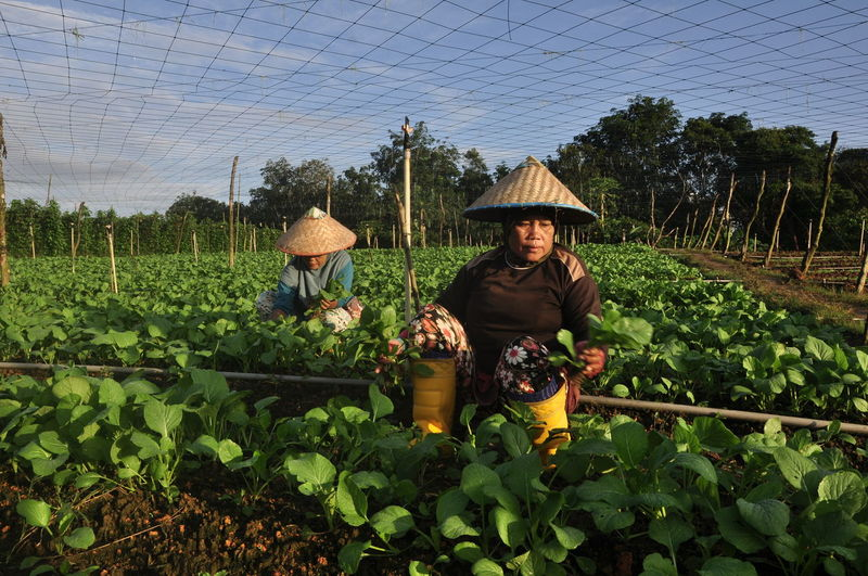 Women working at agricultural field