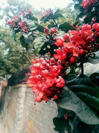 Flowers Red Beautiful Lovely Mobile Photography University Campus Delhiuniversity NorthCampusDu Lovelynatureshots EyeEm Nature Lover EyeEm Flower
