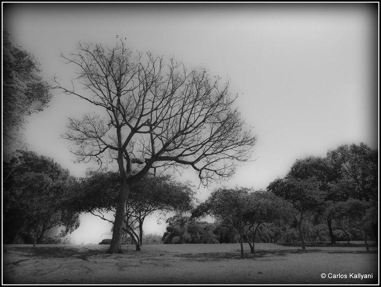 Cinza Tree No People Day Photography Foto Fotografia Photo Brasília - Brazil Seca Brasília Minha♥ Fotografia Photo Gavião