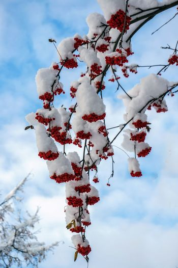 First_snow Natura Plant Winter Sky Outdoors No People Light Day