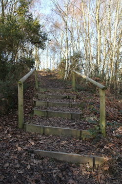 Chobham Common Day Footpath Nature No People Outdoors Scenic Sky Steps Surrey Countryside Tree Walking Wooden Steps