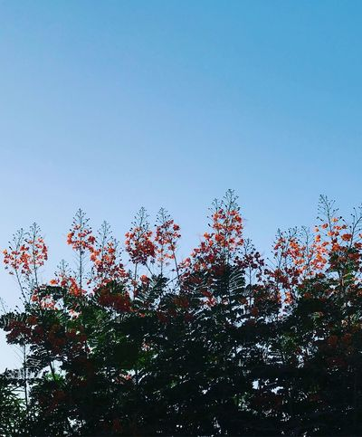 Sky Tree Plant Low Angle View Growth Clear Sky Beauty In Nature