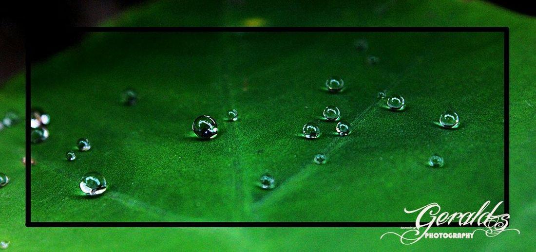 The EyeEm Facebook Cover Challenge Waterballs Water Droplets Waterball