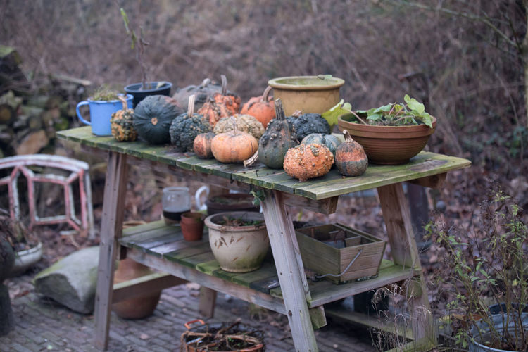 Christmas Market in Bourtange, NL Autumn Food Garden Long Lens Nature No People Old-fashioned Outdoors Rural Scene Teapot Workbench Bourtange