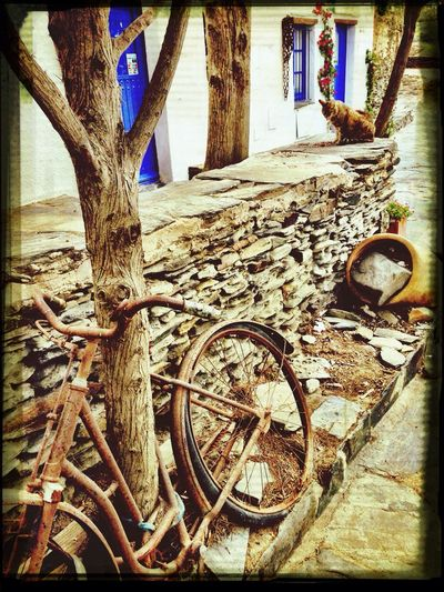 Cat Blue And White Old Bicycle Port Lligat Celebrate Your Ride