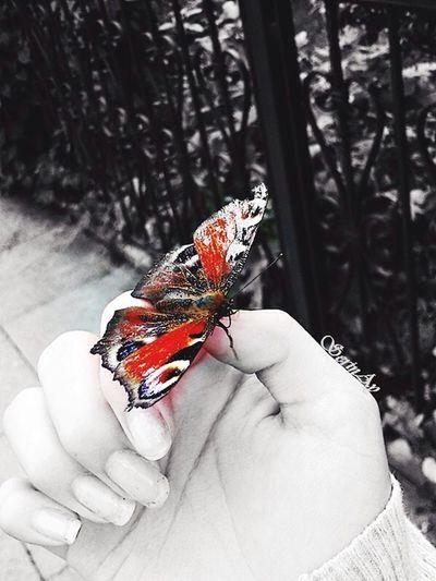 Butterfly Kelebek Schmetterling Animal Handsome Hand El Colors