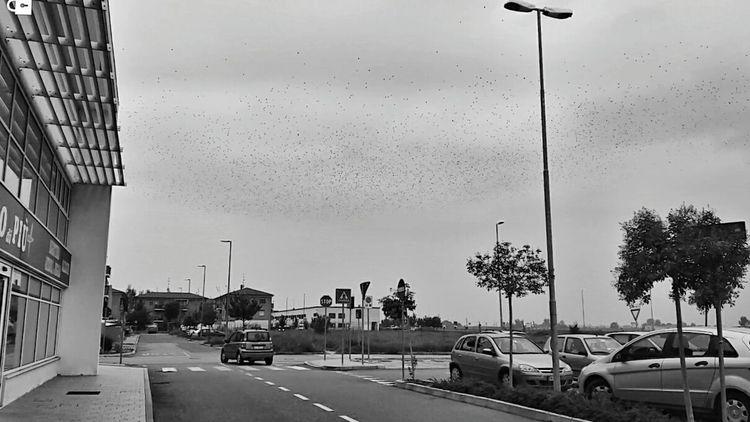 Blackandwhite Samsung Galaxy A5 Photography Landscape Zhoxha Photo Italy Amazing Dramatic Sky Bird Birds Hitchcock Horror Horror Photography Horror Movies Follow Followme