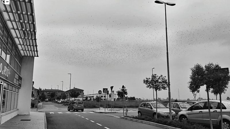Blackandwhite Samsung Galaxy A5 Photography Landscape Zhoxha Photo Italy Amazing Dramatic Sky Bird Birds Hitchcock Horror Horror Photography Horror Movies Follow Followme