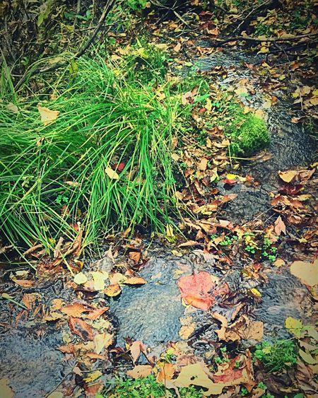 ure Nature Leaf