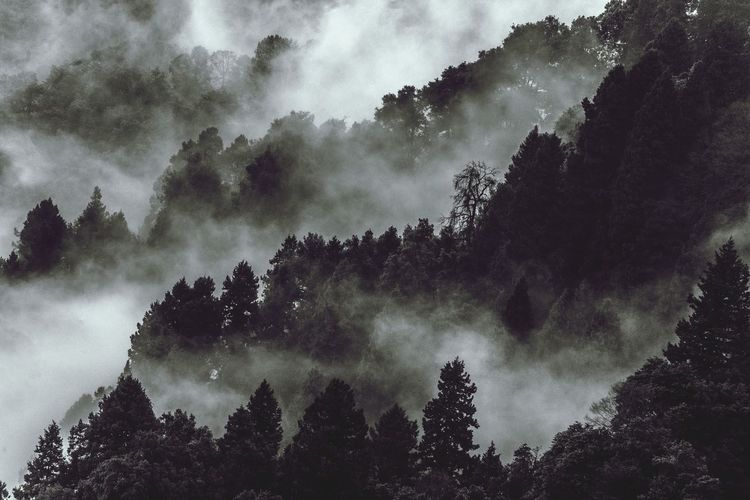 Low angle view of trees against sky during foggy weather