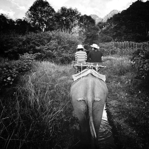 Elephant trek Thailand MellowTrek Black & White Shootermag